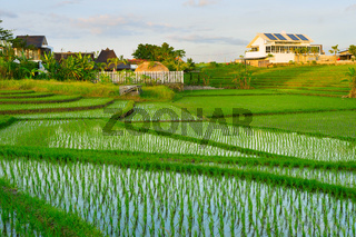 Villa, bali , rice fields, Asia