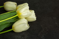 Four white tulips on an old stone table