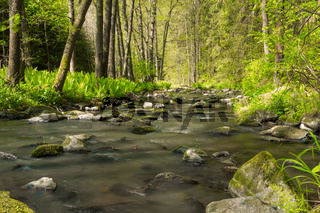 small mountain wild river in spring