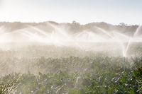 Crop Sprayers in Action