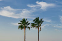 Two tall pam trees against a cloudy blue sky