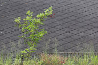 Marodes Dach