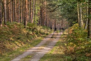 Postweg im Darsser Wald, Halbinsel Fischland-Darss-Zingst