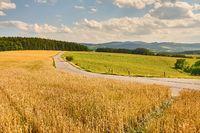 Road through farmlands