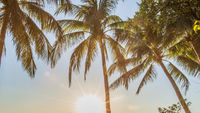 Tropical sunrise with palm trees