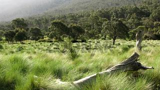 Kosciuszko National Park, Australien