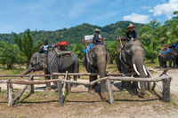 Elephants and their trainers in a camp are waiting for tourists