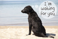 Dog At Sandy Beach, Text I Am Waiting For You