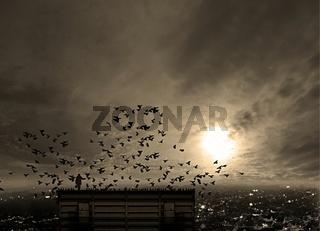 Der Taubenflüsterer