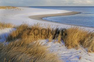 Weißdüne mit Strandhafer und Schnee (Ammophila arenaria) am Weststrand von Sylt, Schleswig-Holstein, Deutschland