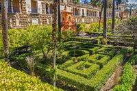 Topiary Garden,The Alcazar Seville,Andalucia, Spain