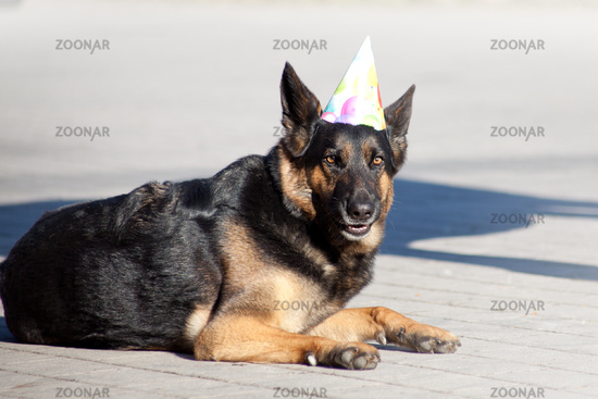 Funny Dog With Party Hat Celebrate His Birthday
