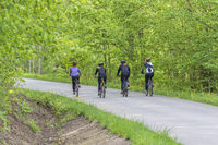 Cyclists on a road in a forest in the summer
