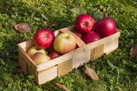 Gesunde frische Äpfel in einem Holzkorb