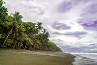 beach with palm trees in Corcovado national park