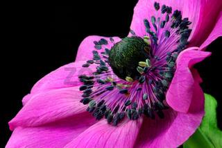 Secretful Springtime's Lady