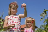 Zwei kleine Mädchen bei der  Johannisbeerenernte