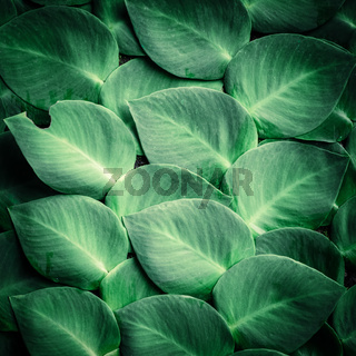 Green tropical plant leaves