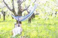 Guitar, basket, hammock, plaid and thermos in a blossoming garden