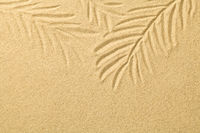 Palm Leaves Drawn in the Sand. Summer Background
