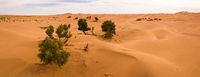Aerial panorama of trees in Sahara desert