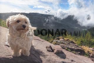 Cute dog alone on a mountain peak
