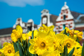 Dutch houses with yellow tulip flowers, Amsterdam, Netherlands.