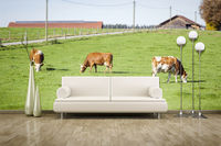 photo wall mural cows
