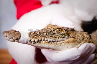 Santa Claus holding a Baby Croc