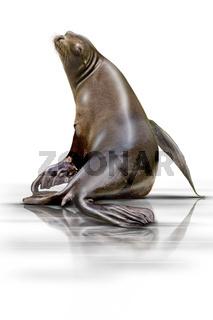Seehund wd71