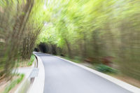 bamboo grove tunnel