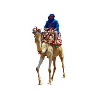 berber on camel isolated