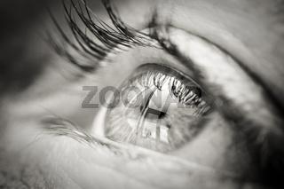 Auge eye
