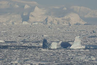 west coast of the Antarctic Peninsula in the winter ice and icebergs downtrodden
