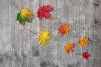 Fall season abstract