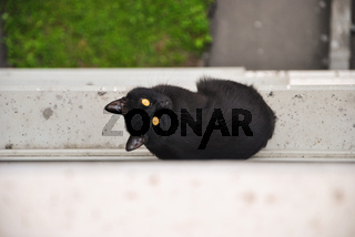Young black cat escaped from the room and sitting outside at the window sill of an apartment house and looking up and around, Moscow, Russia.