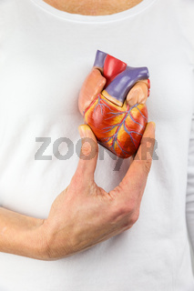 Hand holding model heart on chest
