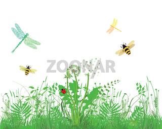 Bienen Insekten.jpg