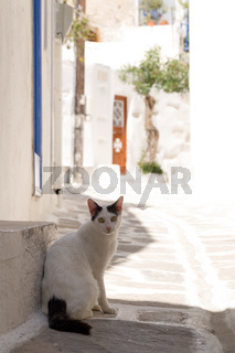 cat in a picturesque street on a greek island