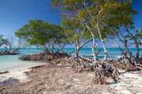 Mangroves at caribbean seashore, Cuba