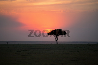Single tree at a sunset on the savanna landscape in Africa