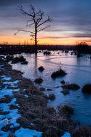 Goldenstedter Moor im Januar