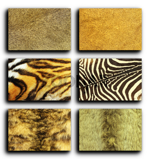 collection of wild animals fur over white background