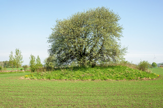 Sown field with a single tree in a rural landscape