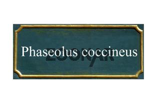 schild Feuerbohne,Phaseolus coccineus
