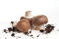 Drei Pilze