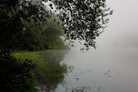 Naturschutzgebiet am Altrhein