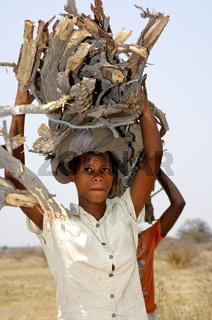 Junge Holzsammlerin, Botswana