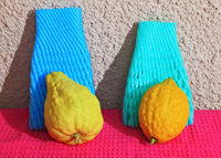 Two etrogs  for Sukkot