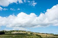 Scenic vineyard located near Punta Del Este, part of The Wine Roads (Los Caminos del Vino) of Uruguay